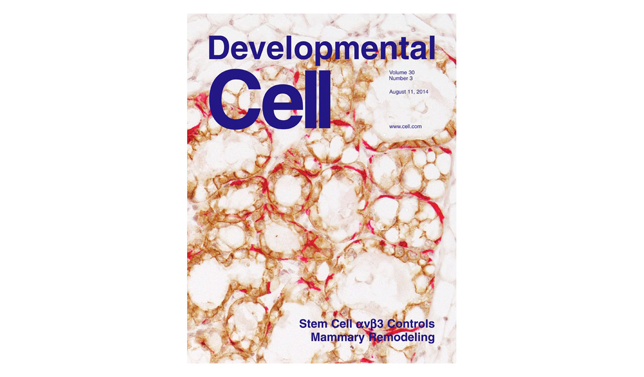 D-cyclins repress apoptosis in hematopoietic cells by controlling death receptor Fas and its ligand FasL