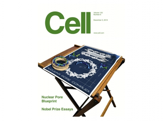 Genome-wide map of nuclear protein degradation shows NCoR1 turnover as a key to mitochondrial gene regulation