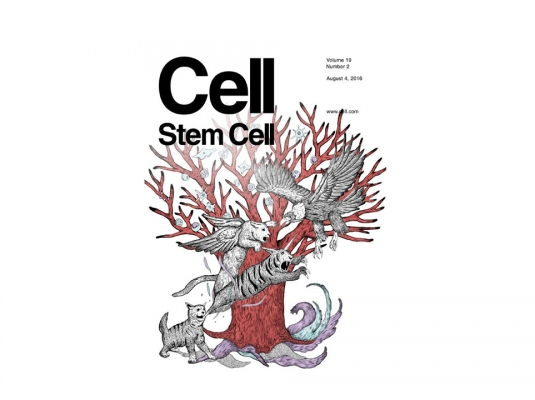 Proximity-Based Differential Single-Cell Analysis of the Niche to Identify Stem/Progenitor Cell Regulators