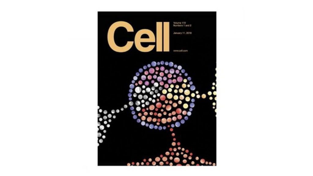 Rapid Mobilization Reveals a Highly Engraftable Hematopoietic Stem Cell.